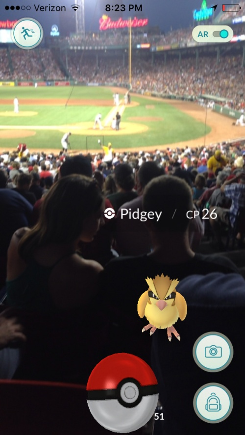 pidgey at the park
